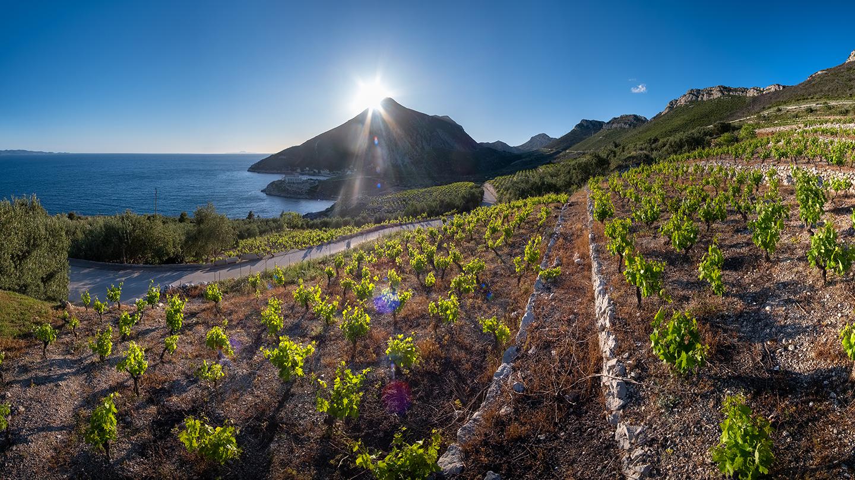 Pelješac vineyards